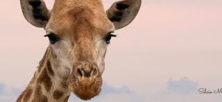 Linguaggio Giraffa